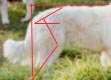 now compare the angles in this photo to the measuring length and angles image and you get a good picture of what this really looks like on a real dog