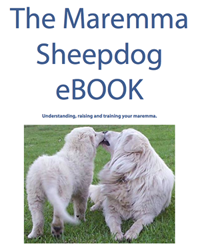 picture of the cover of the ebook you can purchase to assist you in learning how to raise your maremma puppy correctly